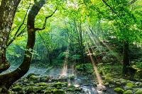栃木県 森の木々と光と渓流