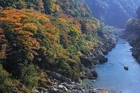 徳島県 大歩危峡の紅葉