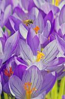 花粉団子をつけて飛ぶ蜂