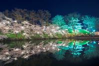 新潟県 上越市 高田城の夜桜
