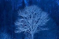 福島県 金山町 朝日に浮かび上がる木