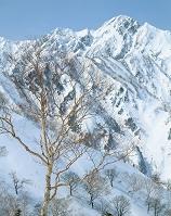 長野県 五竜岳