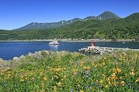 北海道 エゾカンゾウとウトロ港灯台と知床連峰とおーろら号
