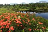 八甲田山と睡蓮沼