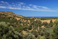 ギリシャ クレタ島 アギア・トリアダ遺跡とオリーブ畑