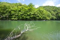 青森県 十二湖の一つに数える鶏頭場の池