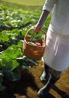 カゴに野菜を入れて運ぶ女性