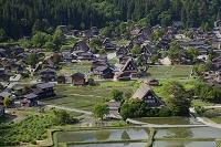 岐阜県 新緑の合掌造り集落 白川郷