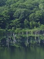 北海道 落合ダムと木