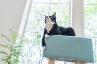 椅子の上で寛ぐ猫