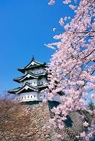 青森県 桜と弘前城