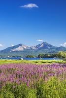 福島県 桧原湖よりミソハギの花と磐梯山