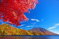 栃木県 日光市 紅葉の中禅寺湖と男体山