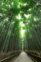 京都府 嵯峨野竹林の小径