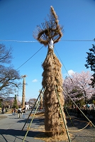 滋賀県 八幡祭り葦松明(よしたいまつ)準備