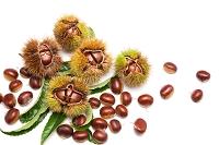 果物 クリの葉とイガグリ