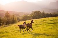 牧場で走る馬