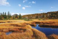 北海道 紅葉の神仙沼湿原
