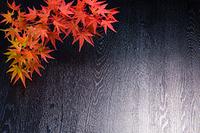 紅葉 和のイメージ