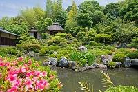 京都府 等持院 初夏の芙蓉池庭園