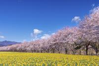 群馬県 岩井親水公園