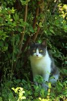お庭に来た猫
