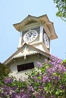 北海道 時計台とライラック