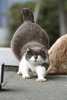 神奈川県 藤沢の猫