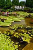 滋賀県 水生植物園