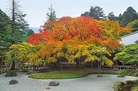 福岡県糸島市雷山千如寺大悲王院の大楓