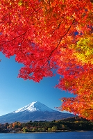 山梨県 紅葉と富士山