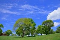 新潟県 妙高市 新緑の樹 笹ヶ峰高原