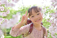 シダレザクラの下でVサインをしてる日本人の女の子