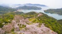 広島県 しまなみ海道 伯方島 桜の開山公園