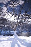 北海道 鳥沼公園の冬