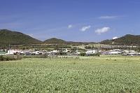 沖縄県 伊是名島 勢理客集落