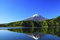 山梨県 残雪の富士山と新緑の河口湖に投影する逆さ富士