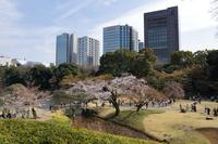 東京都 春の小石川後楽園