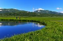 北海道 雨竜町 雨竜沼湿原の池塘と暑寒別岳