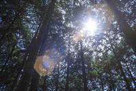 太陽と森のイメージ