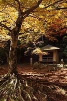 奈良県 紅葉の吉野山奥千本西行庵