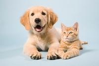 寝転ぶ犬と猫