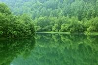 北海道 美瑛町 新緑の湖