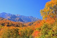 新潟県 奥只見 紅葉と荒沢岳連山