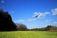 千葉県 成田空港付近 ジェット旅客機 日本航空