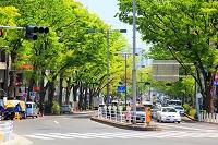 東京都 渋谷区 ケヤキ並木と表参道