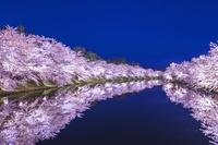日本 青森県 弘前城西濠と桜