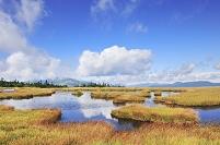 群馬県 尾瀬 鳩待ち通り アヤメ平の草紅葉と至仏山