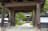 静岡県 清見寺 山門と佛殿