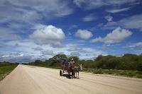 ナミビア ロバ車